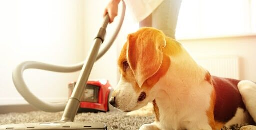Dog with a Vacuum Cleaner